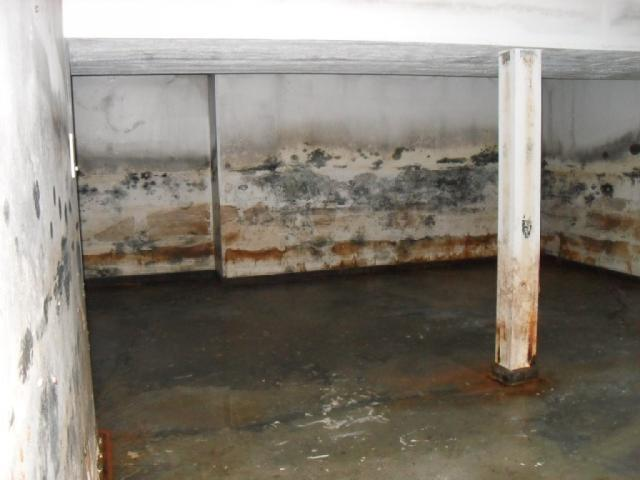 to get rid of moldy basement in bridgeport ct budget dry basement