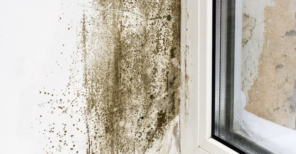 mold-and-mildew Get Rid Of Damp Basement Smell