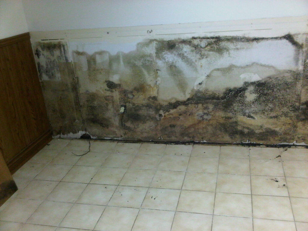 Mold remediation - What to do about mold ...
