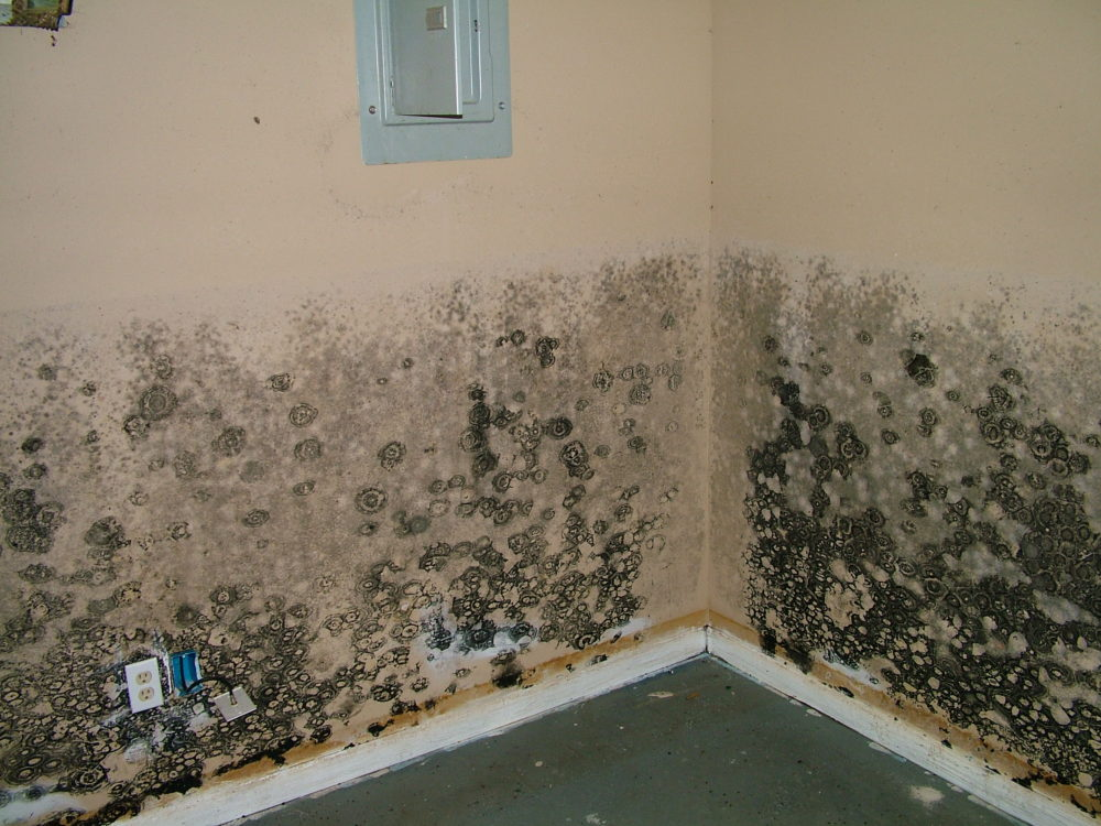 Signs That You Need Black Mold Testing New Britain Ct