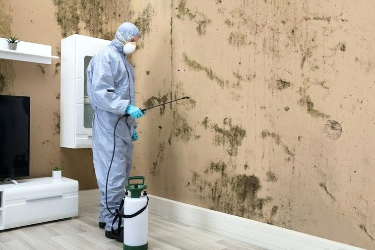 Mold Removal | Killingworth, CT | Budget Dry Waterproofing