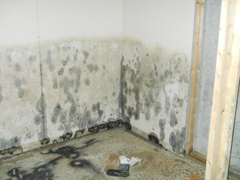 New Britain, CT | Mold Removal