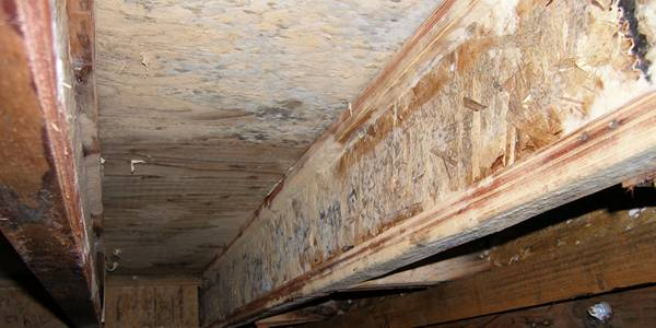 Mold Remediation | Stamford, CT